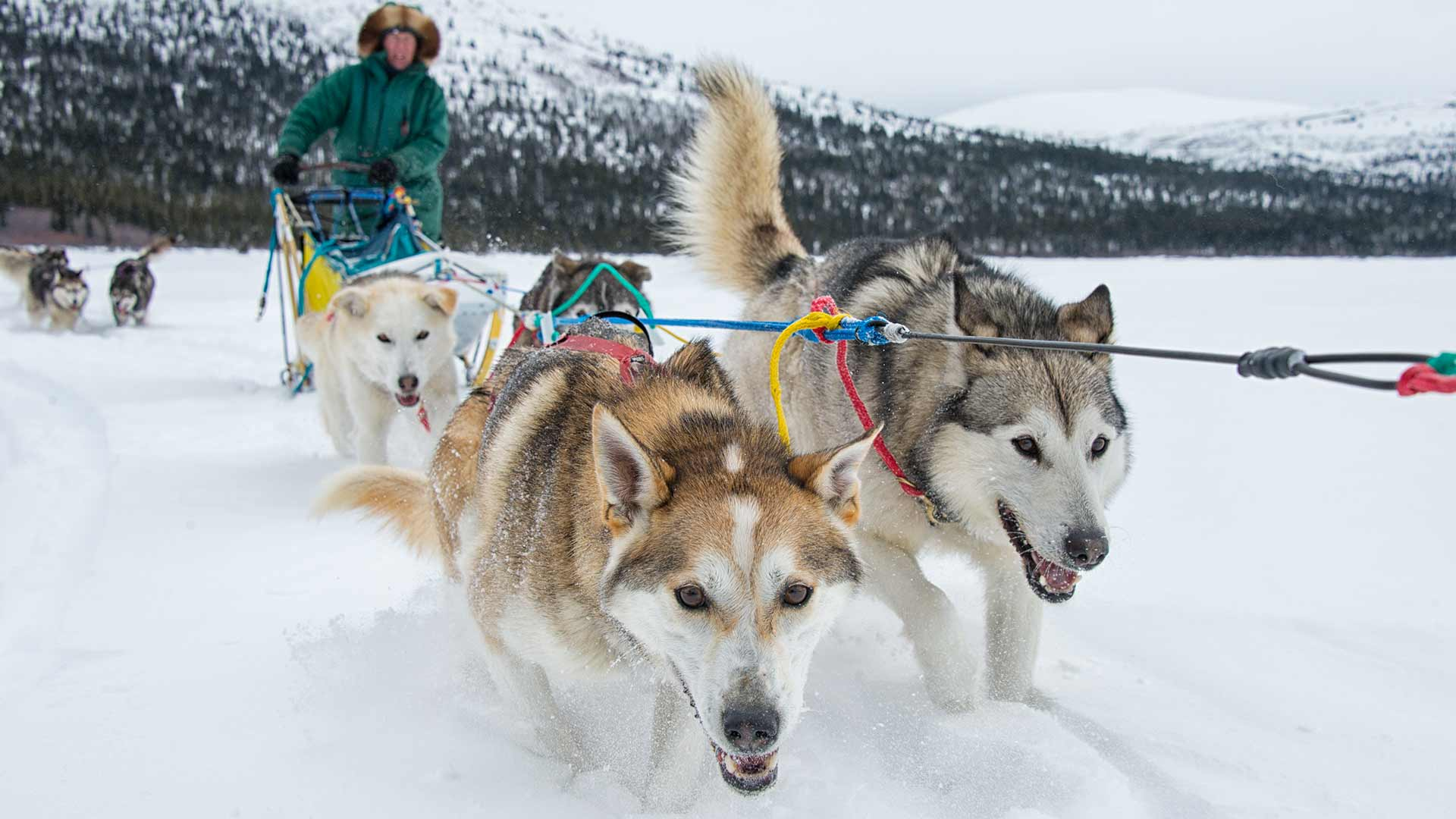 Silver Mountain Water Park >> Things To Do: Dogsledding | Travel Yukon - Yukon, Canada ...