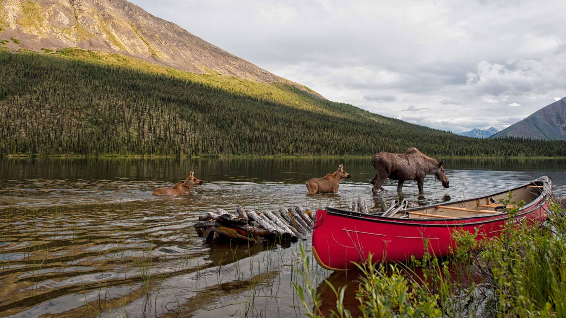 Northern Amp Arctic Yukon Wildlife Travel Yukon Yukon