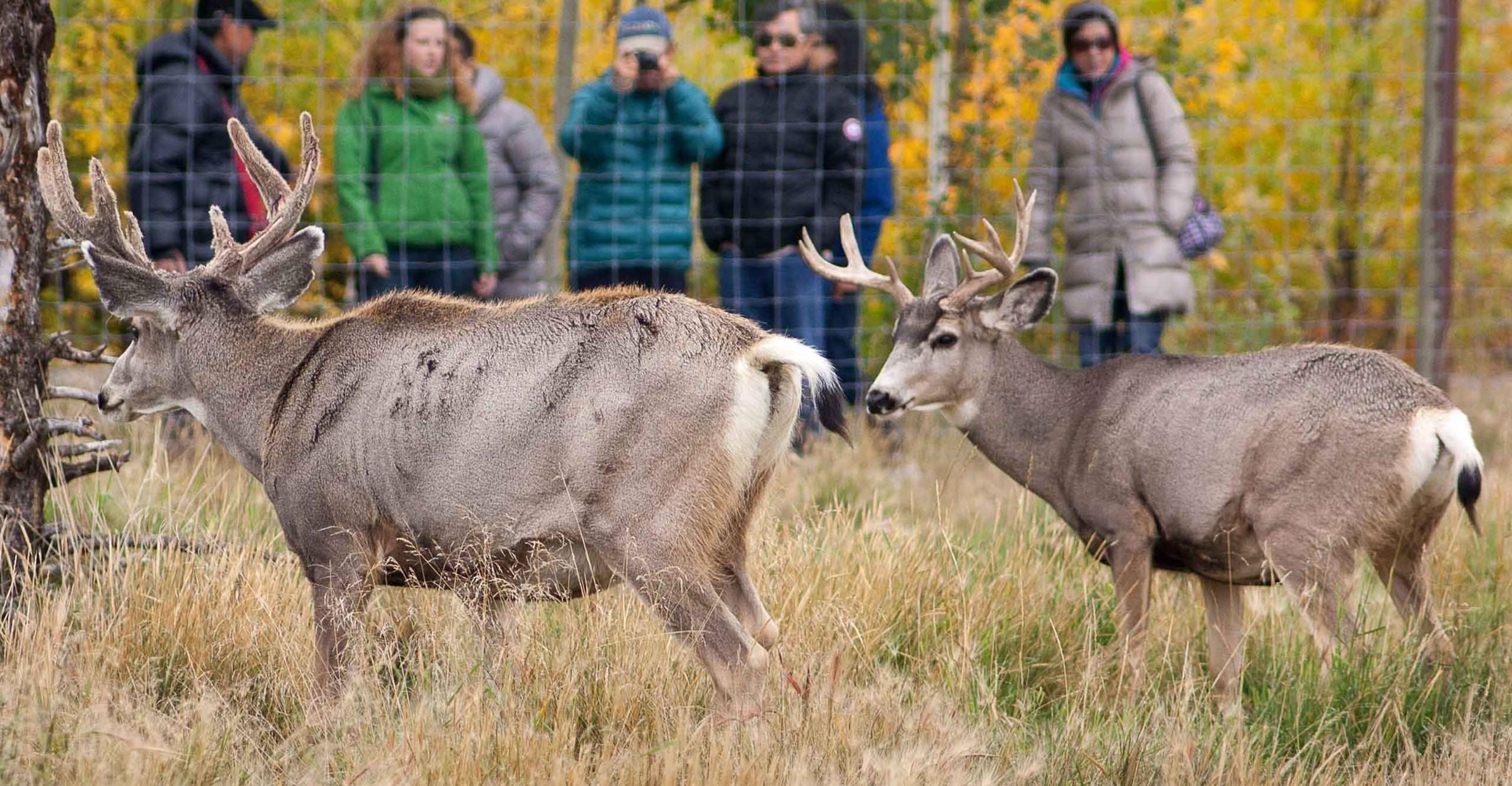 Yukon Wildlife Preserve | Travel Yukon - Yukon, Canada