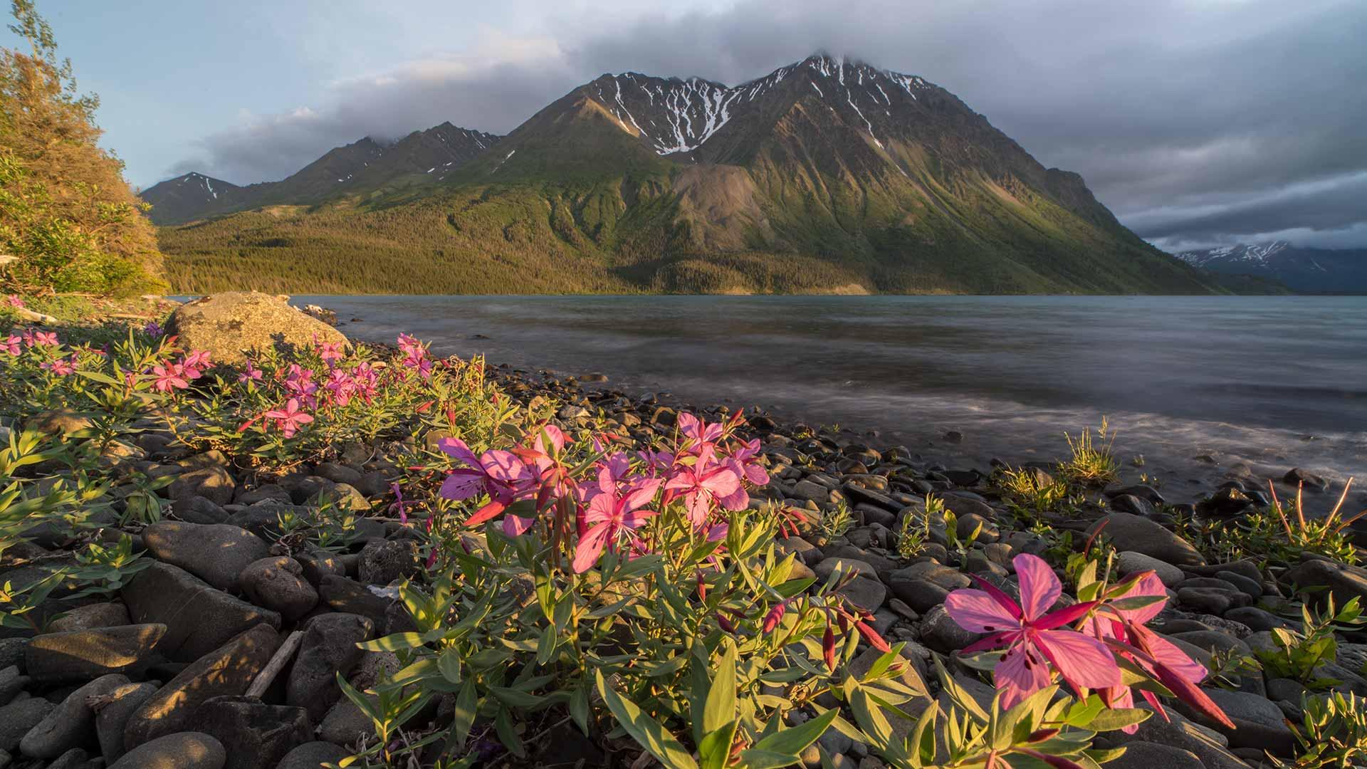 Yukon In The Summer Travel Yukon Yukon Canada