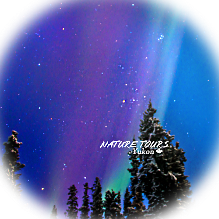 Christmas Aurora Package | Travel Yukon, Canada